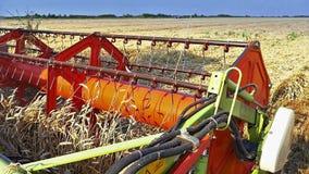 Mietitrice del grano che lavora nel campo stock footage