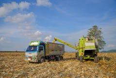 Mietitrice di cereale, mietitrice di cereale in Tailandia Immagine Stock