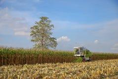 Mietitrice di cereale, mietitrice di cereale in Tailandia Immagini Stock Libere da Diritti
