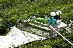 Mietitrice meccanizzata della foglia di tè Fotografie Stock