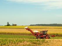 Mietitrice rossa della canna dell'azienda agricola sullo sbarco di agricoltura Immagine Stock
