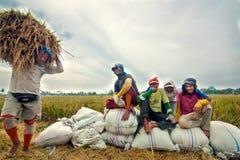 Mietitrice tradizionale di Bali Fotografie Stock Libere da Diritti