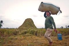 Mietitrice tradizionale di Bali Fotografia Stock Libera da Diritti
