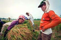 Mietitrice tradizionale di Bali Immagini Stock Libere da Diritti