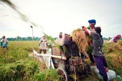 Mietitrice tradizionale di Bali Immagine Stock Libera da Diritti