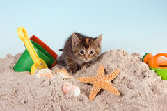 Miezekatze auf einem Strand Stockbild
