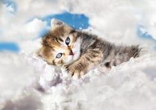 Miezekatze auf Wolken Stockbild