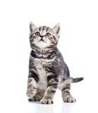 Miezekatze der schwarzen Katze auf weißem Hintergrund Lizenzfreies Stockbild