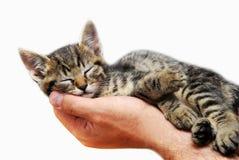 Miezekatze, die in den Armen schläft Stockbild