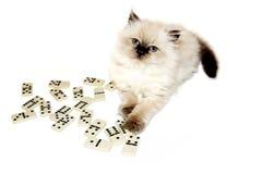 Miezekatze, die Dominos spielt Lizenzfreies Stockfoto