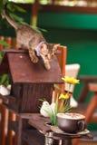 Miezekatze, die Kaffeetasse im Garten betrachtet stockbilder