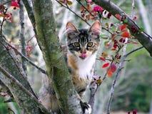 Miezekatze in einem Baum Lizenzfreies Stockbild