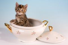 Miezekatze in einem Suppe Tureen Stockbild