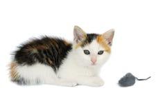 Miezekatze-Katze mit Mäusespielzeug Stockfotografie