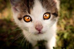 Miezekatze mit ehrfürchtigen Augen lizenzfreie stockbilder