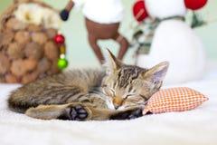 Miezekatze mit Weihnachtsdekoration Stockbild