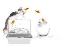 Miezekatze Pawing am Goldfish-Flugwesen aus Wasser heraus Stockbilder
