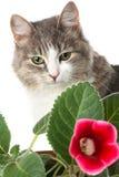 Miezekatze und Blume Lizenzfreies Stockfoto