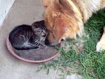 Miezekatze und der Hund Stockfoto