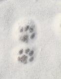 Miezekatzeabdruck im Schnee Stockbilder