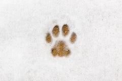 Miezekatzeabdruck im Schnee Stockfotos