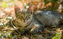 Miezekatzekatze der getigerten Katze, die heraus in der Tür der Blätter sitzt lizenzfreies stockfoto