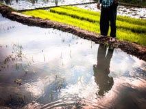 Mig och risfält Arkivbilder