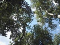 Migalhas verdes da árvore fotos de stock royalty free
