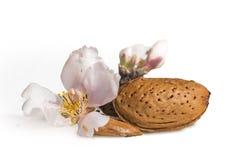 Migdałów kwiatów ziarno odizolowywający dla tła Zdjęcia Royalty Free