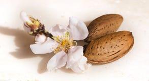 Migdałów kwiatów ziarno odizolowywający w bielu dla tła Obrazy Stock