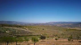 Migdałowego drzewa krajobraz zbiory wideo