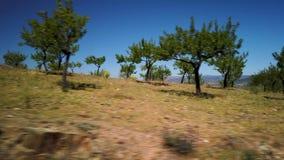 Migdałowego drzewa krajobraz zdjęcie wideo
