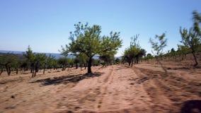 Migdałowego drzewa krajobraz zbiory
