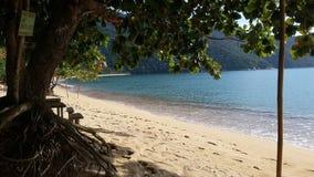 Migdałowy drzewo ocienia plażę Zdjęcia Royalty Free