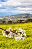 Migdałowy okwitnięcie w Agrigento Zdjęcia Royalty Free