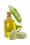 migdałowy olej Fotografia Stock