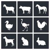 Migdali ikony kolekcję Zdjęcia Royalty Free