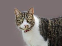 Migdali kota zdjęcia stock