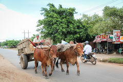 Might ox cart. In the street of Vietnam. There are wonderful bas-relief depictions of carts being pulled by oxen Stock Photo