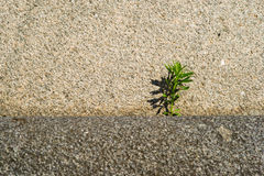 The might of stone and the power of life. A green plant on a granite stone. The might of stone and the power of life Royalty Free Stock Photography
