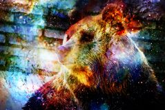 Mighty bear in space. Photos with graphic effect. Computer collage. Cosmic space. Royalty Free Stock Image