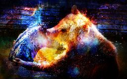 Mighty bear in space. Photos with graphic effect. Computer collage. Cosmic space. Royalty Free Stock Photo