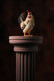 The Mighty Chicken Royalty Free Stock Photo