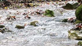 Mighty Creek in Autumn Panoramic View stock footage