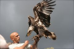 The Mighty eagle Royalty Free Stock Photo
