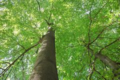 Mighty green trees Stock Image