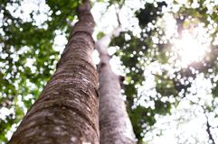 Mighty old tree with green spring leaves, Selective focus Stock Images