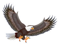 Mighty predator eagle in flight  on Royalty Free Stock Photos