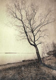 The mighty tree Royalty Free Stock Photography