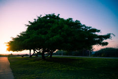 Mighty Tree. A tree, sunset of a warm summer day Stock Photos